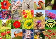 Biodiversity, flowers, animals, full of colors