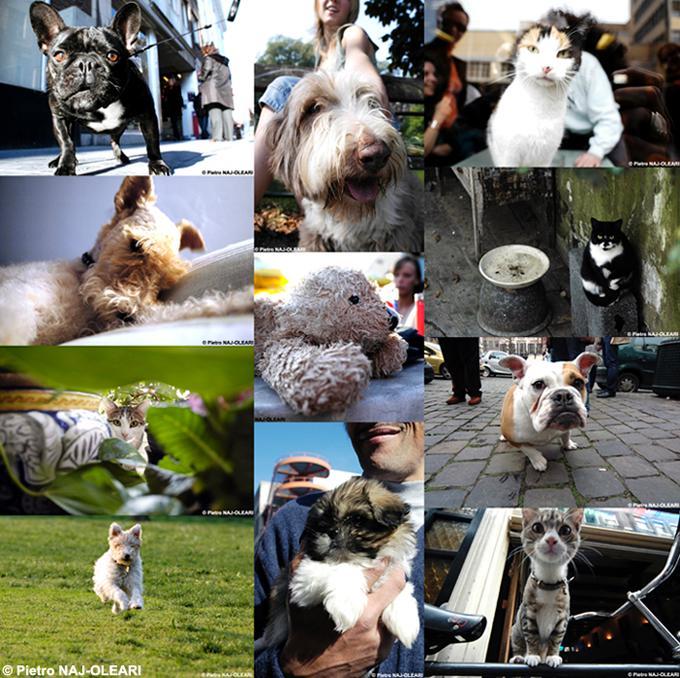 Psi a kočky - koláž