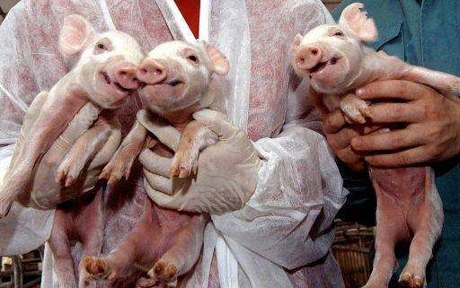 Parlement européen - Rejet d'un projet d'autorisation d'aliments clonés