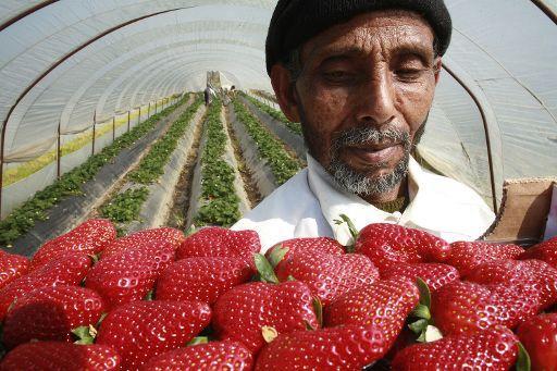Un culegător de fructe în Grecia ©BELGA_AFP PHOTO_Yiannis Liakos