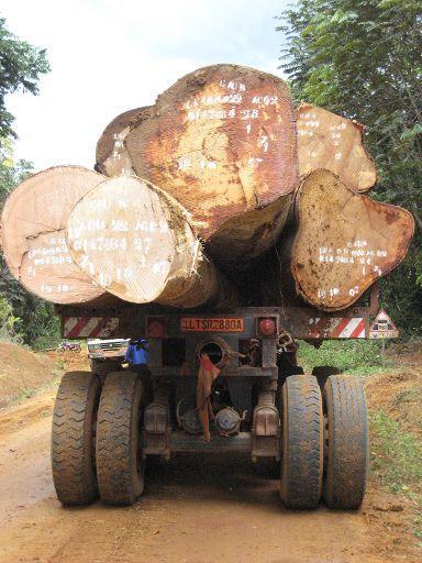 Τα δάση του Καμερούν, από τα πλουσιότερα στον κόσμο  είναι ίσως εκείνα που απειλούνται περισσότερο από οποιαδήποτε άλλα ©BELGA/AFP/DELPHINE RAMOND