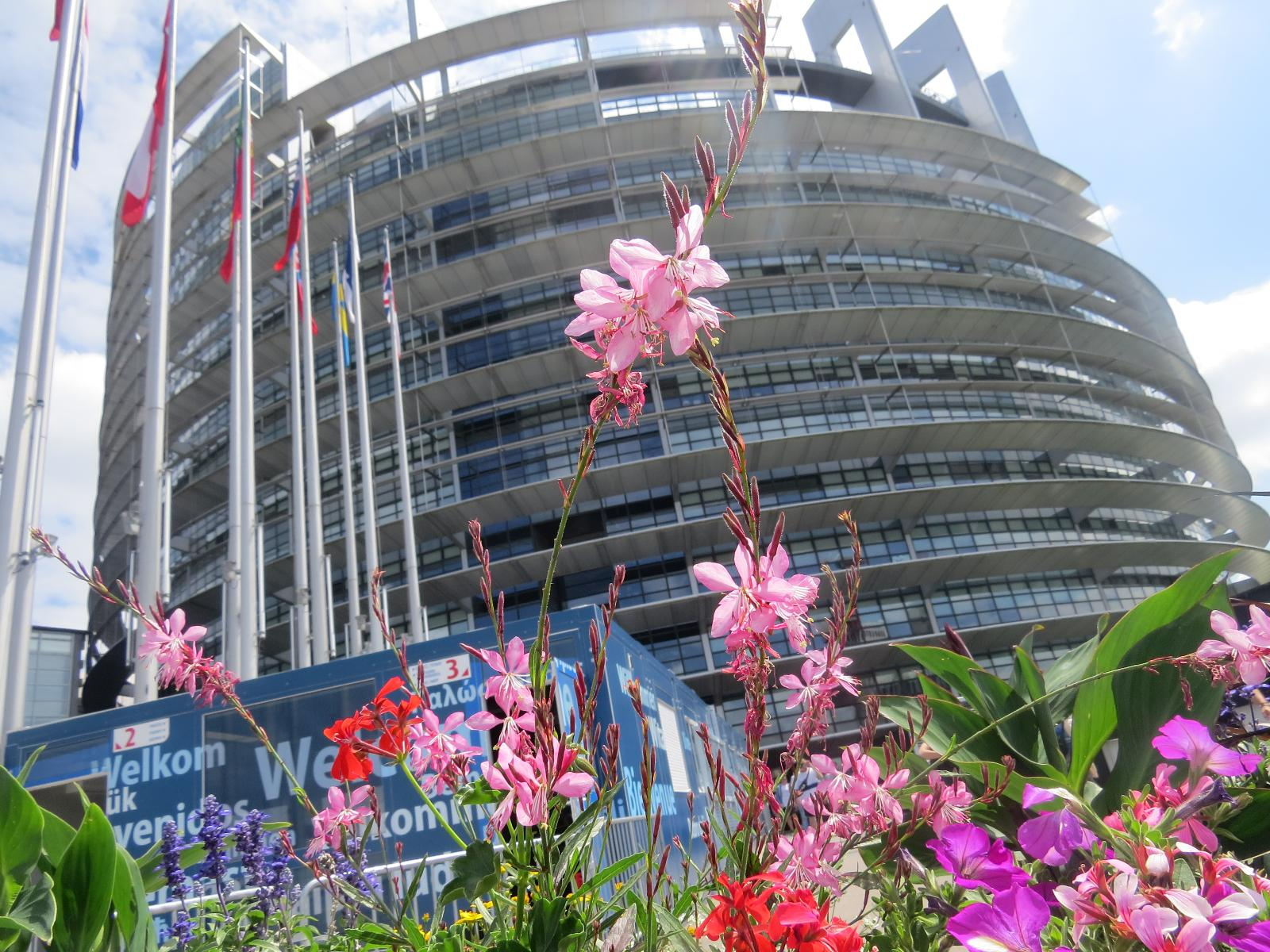 Flowers and European Parliament building Strasbourg