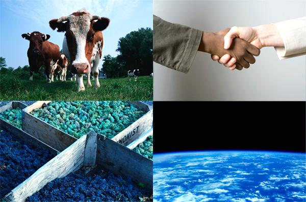 A cow, two hands shaking,  grapes and space
