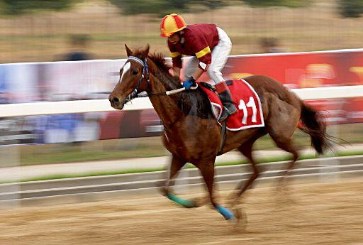 A horse in a horse racing contest. ©BELGA_MAXPPP