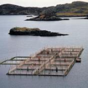 A salmon farm in the Western Isles of Scotland. The fish are bred in cages in inland waters and grown in sea pens. When they are large enough they are caught, killed and sent to a smokery. ©BELGA_SCIENCE