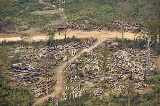 The aim is to cub illegal logging like this seen in Laos. © AFP PHOTO/HOANG DINH Nam/Belga