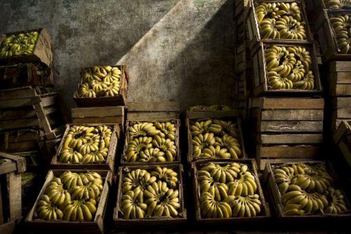 Madalamad tariifid tähendavad tulevikus odavamaid banaane©BELGA_AFP_Ernesto Benavides