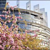 Flowering tree outside the EP's building in Strasbourg