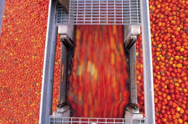 Tomatoes being processed ©BELGA/EUREKA