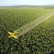 Acrop duster plane spraying fungicide to protect the plantation