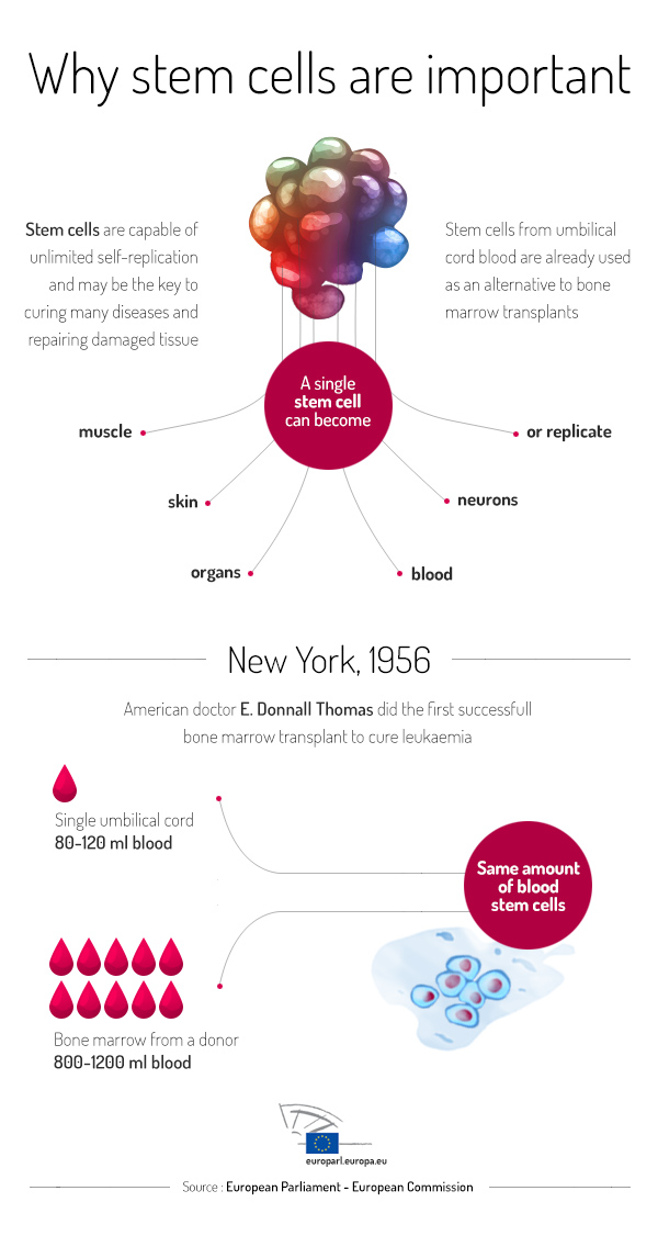 Infographic about stem cells