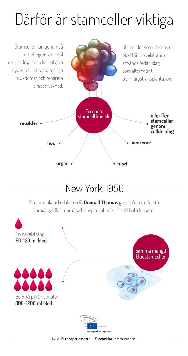 Grafik: Därför är stamceller viktiga
