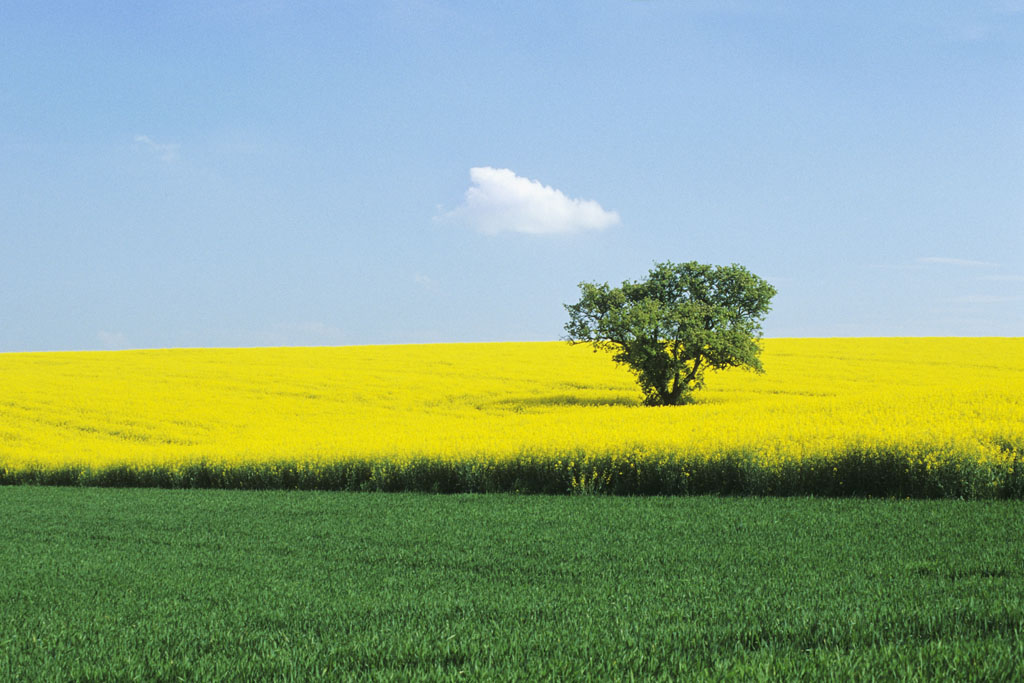 Environment Committee backs flexibility for EU countries to ban GMO crops © BELGA_PHOTONONSTOP