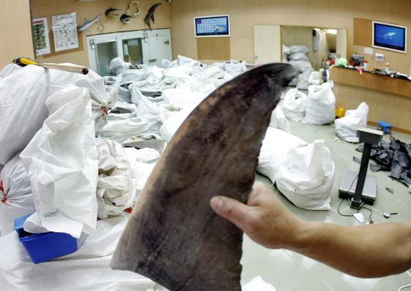 Wholesale shop keeper displaying a shark fin