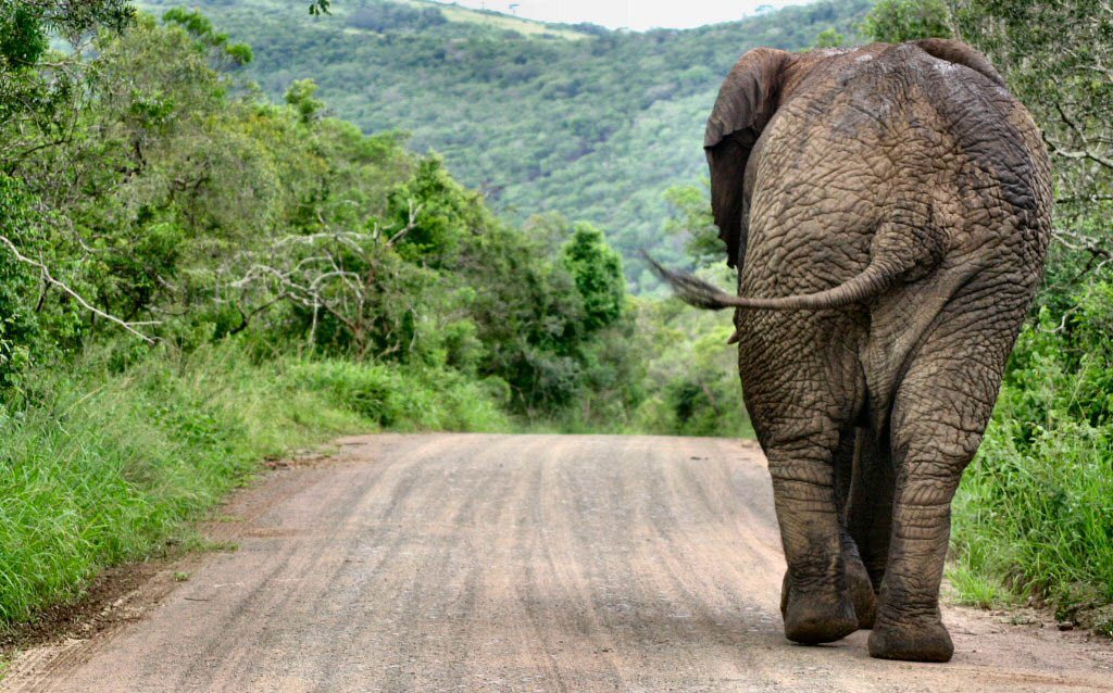The EU must fight poaching of endangered animals
