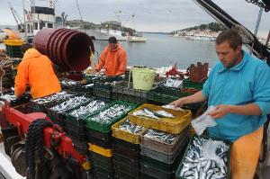La réforme de la politique commune de la pêche (PCP) mettra fin aux rejets de captures non désirées en mer