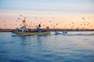 A fishing boat on the way back to the harbor ©BELGA/EASYFOTOSTOCK