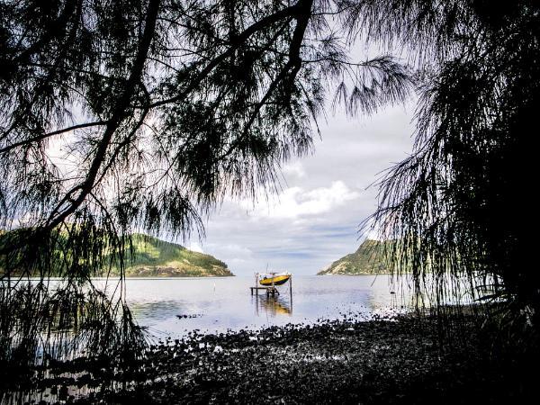 Bäume und Meer