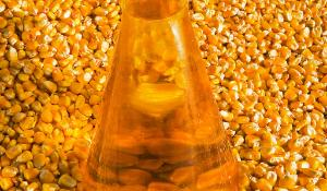 Agriculture - Harvested grain corn and a flask of corn oil, used both as a cooking oil and a feedstock used for biodiesel