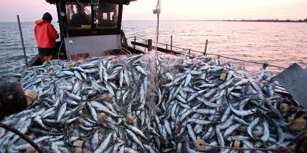 The Parliament debates on the multi-annual plan for the stocks of cod, herring and sprat in the Baltic Sea and the fisheries exploiting those stocks