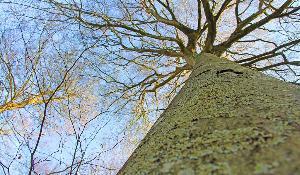 A huge tree in a forest ©BELGA_Easyfotostock_L.Mikhailova