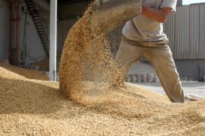 Il n'existe aucun moyen réaliste pour les pays de l'UE de maintenir hors de leurs marchés nationaux des denrées alimentaires ou des aliments pour animaux contenant des OGM, estiment les députés.