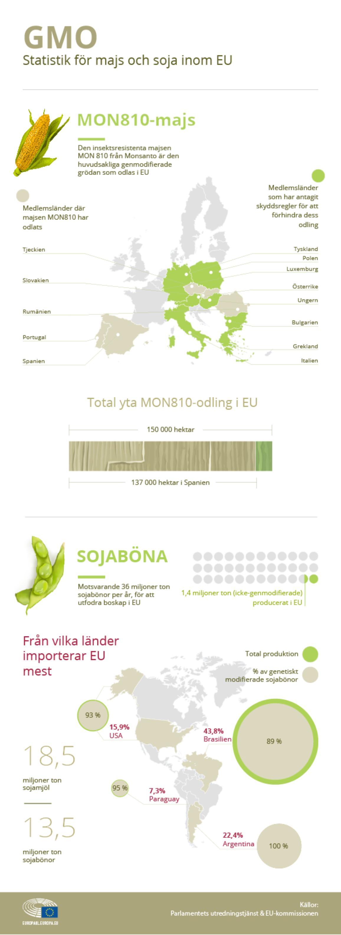 Nyhetsgrafik om förekomsten av GMO i EU