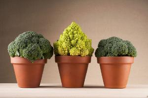 Les députés craignent qu'une autorisation de breveter des caractères végétaux obtenus naturellement puisse créer des monopoles sur le marché alimentaire.
