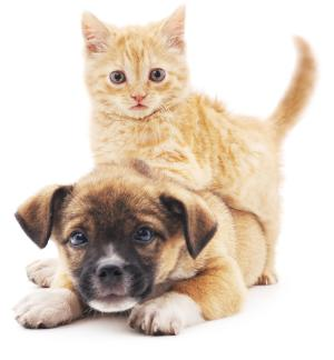 Registration of pet animals ©AP Images/ European Union-EP