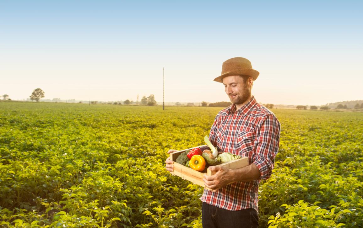 Happy smiling farmer with hat standing proud in front of field landscape holding wooden box with fresh vegetables