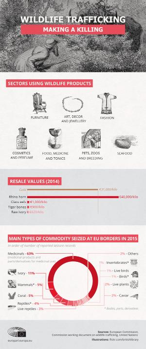 infographic illustrasie