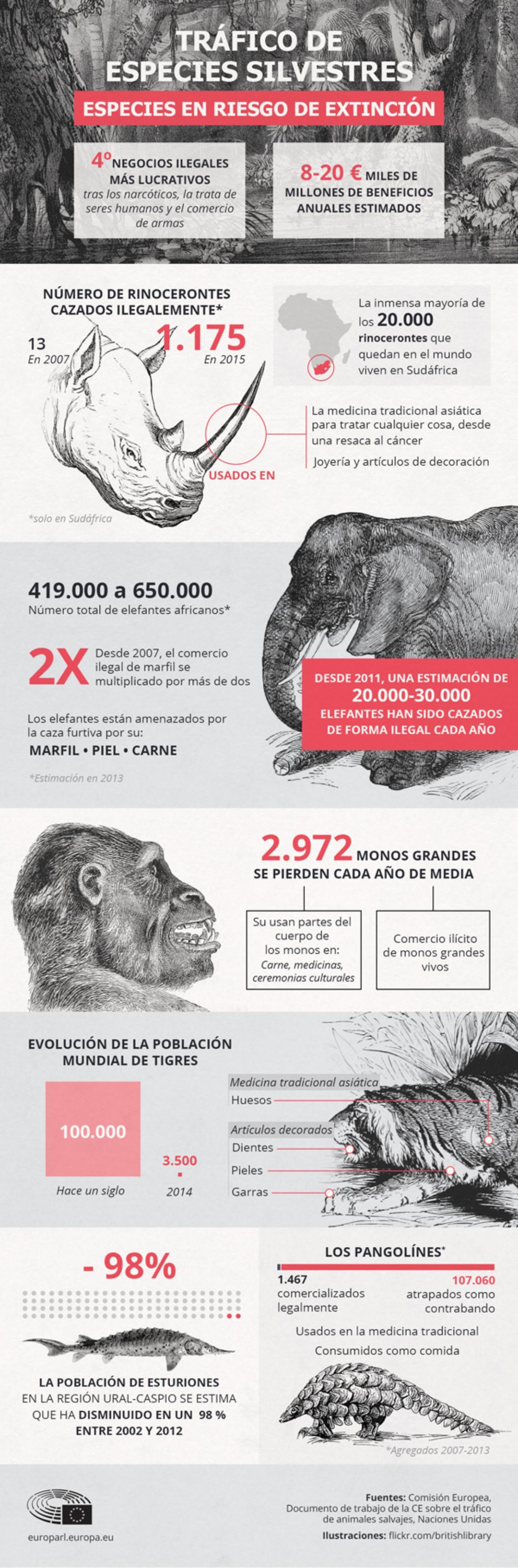Las dos infografías que ilustran esta información detallan los datos más destacados sobre el tráfico y las especies en peligro de extinción.