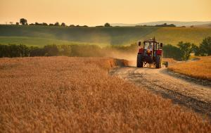 Tractor is going through agriculture field full of gold wheat