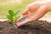 Agriculture / Hand pouring fertilizer to a young green plant with morning sunlight / Nurturing baby plant