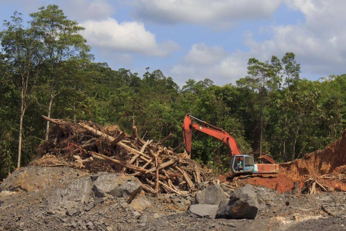Deforestation for oil palm plantations ©AP Images/European Union-EP