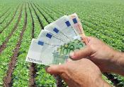 Bank notes in foreground of a field of vegetables