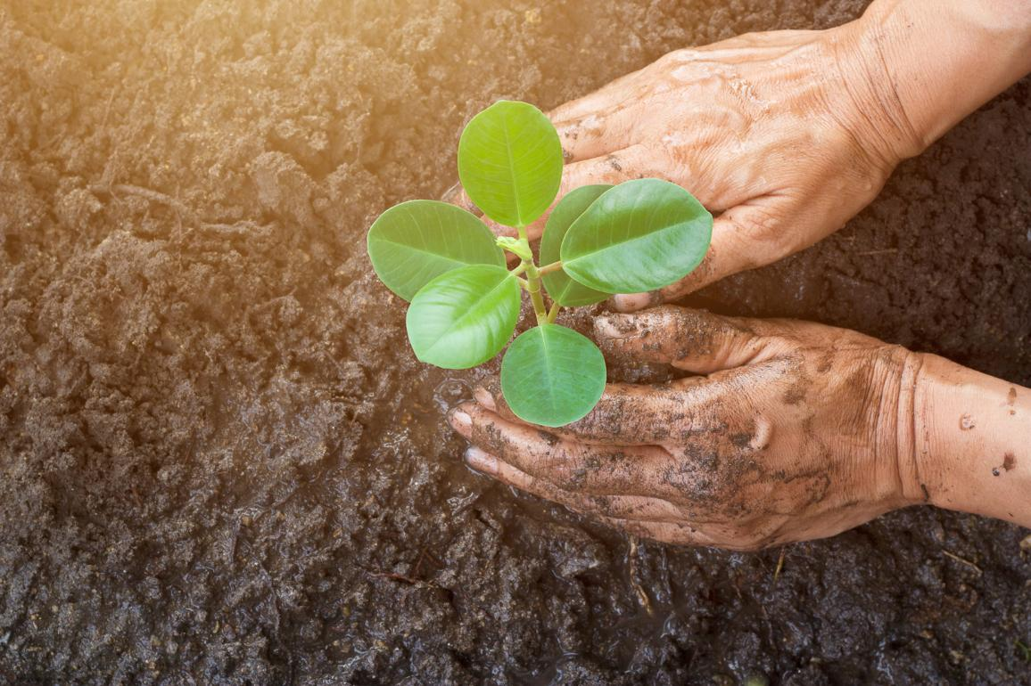 Man hands planting a young tree ©AP Images/European Union-EP