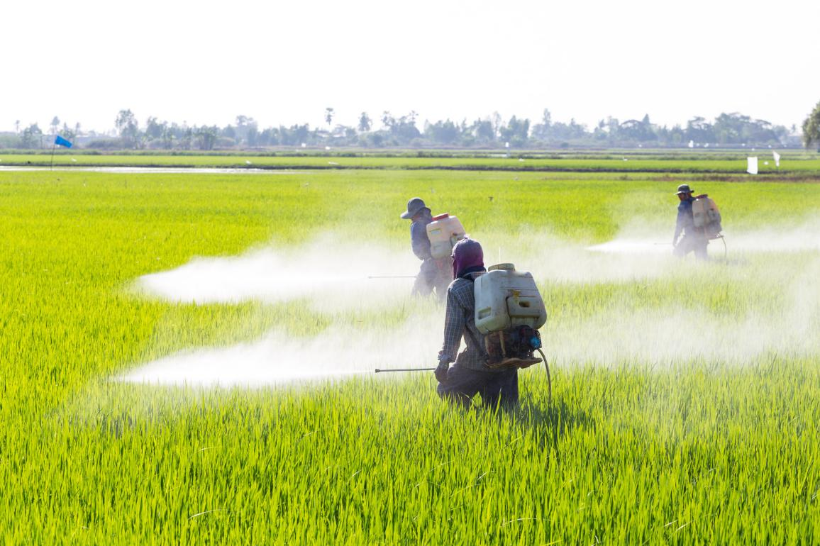 Farmer spraying pesticide in the rice field ©AP Images/European Union-