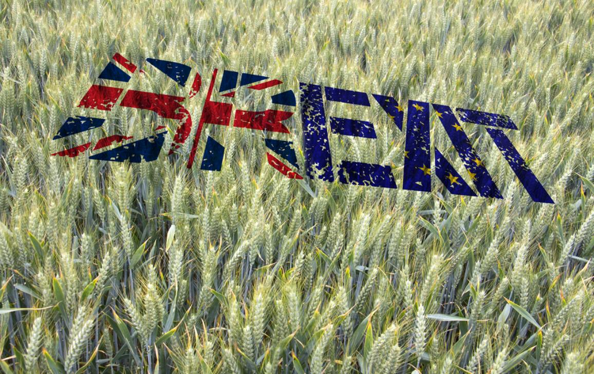 Wheat field with Brexit stamped on it