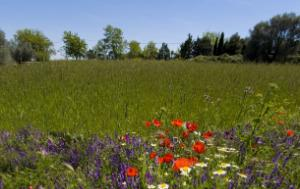 wild flowers in front of cultivated field