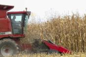 harvesting_corn