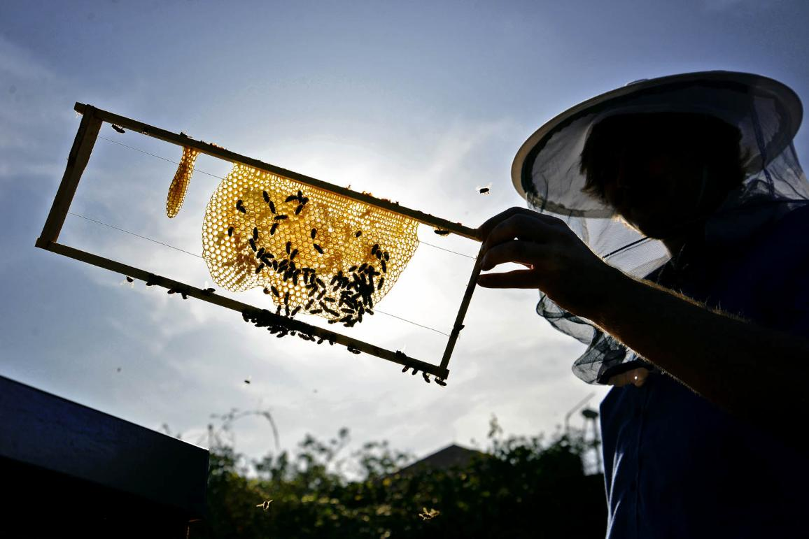 Silhouette of beekeeper against sun ©AP Images/European Union-EP