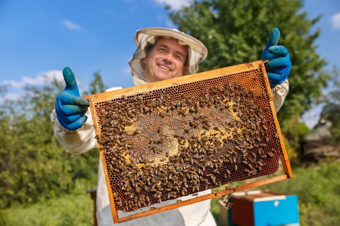 Včelár a včely