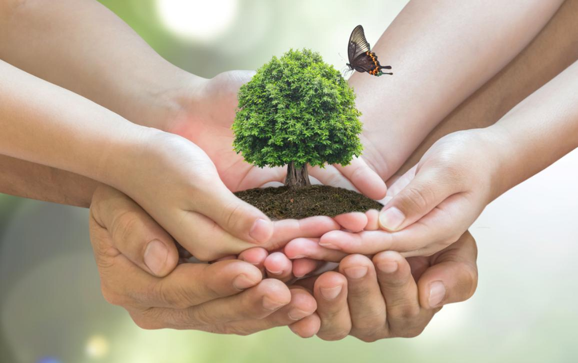 joined hands holding a planted tree with a butterfly