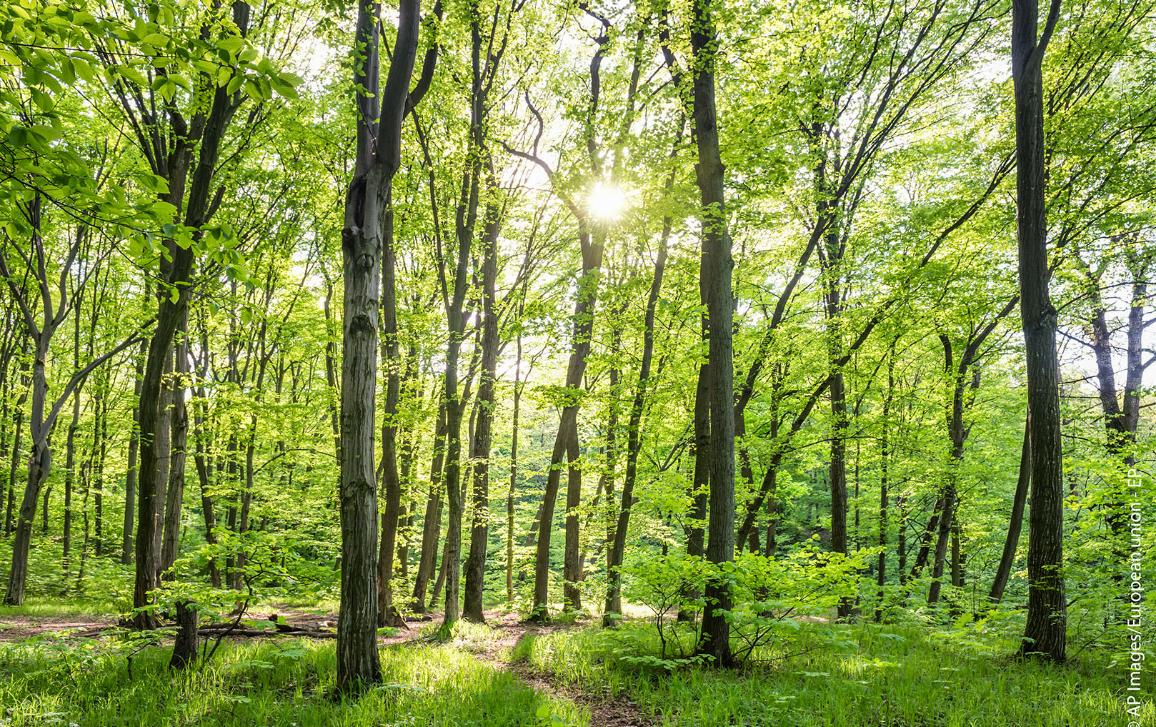 Morning in sunny forest_