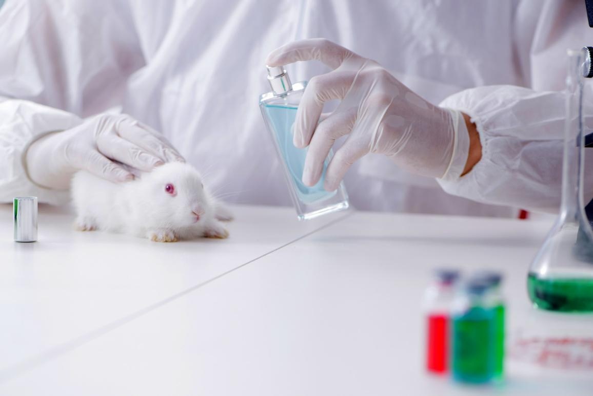 White rabbit in scientific lab experiment ©AP Images/European Union-EP