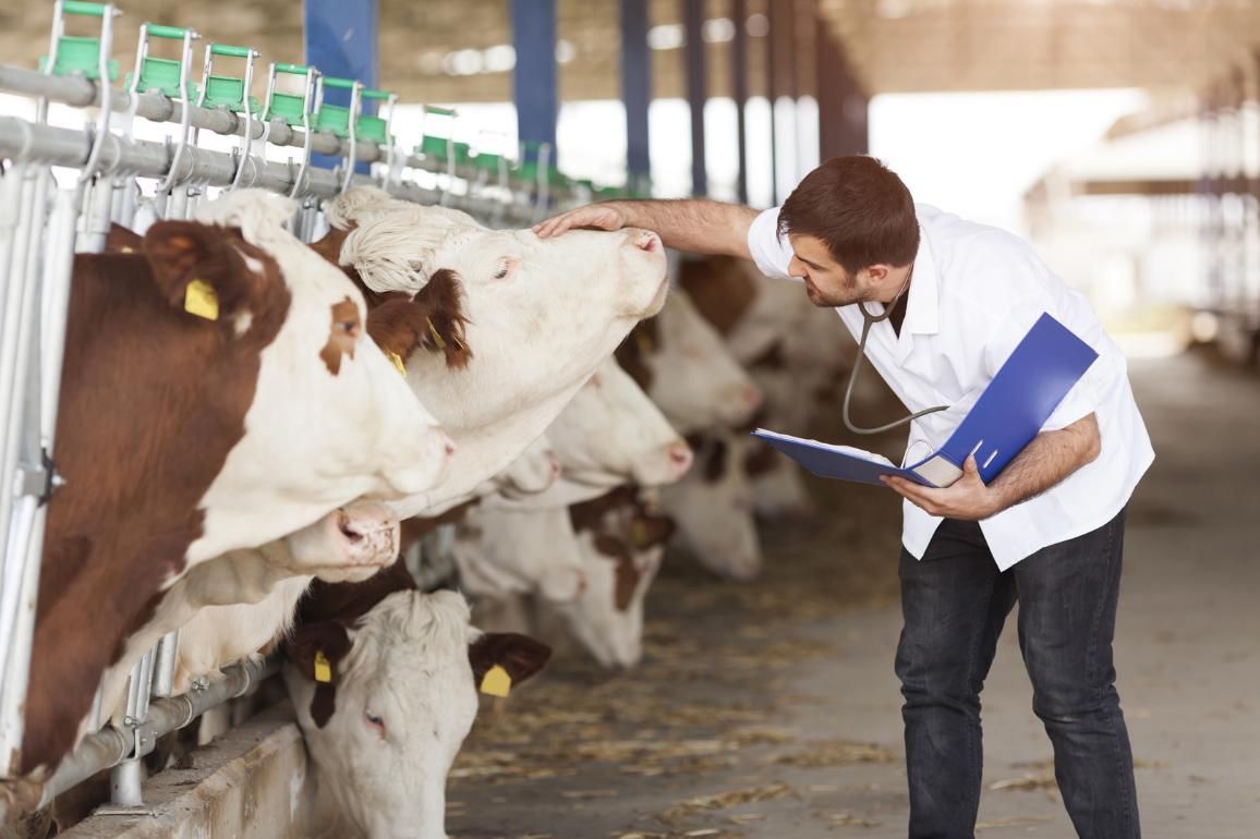 Cattle vaccination © AP Images/European Union - EP