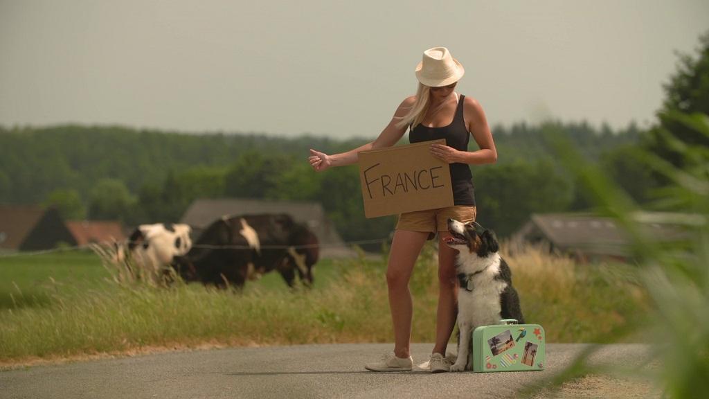 Le regole per viaggiare con gli animali da compagnia in for Ricerca sul parlamento