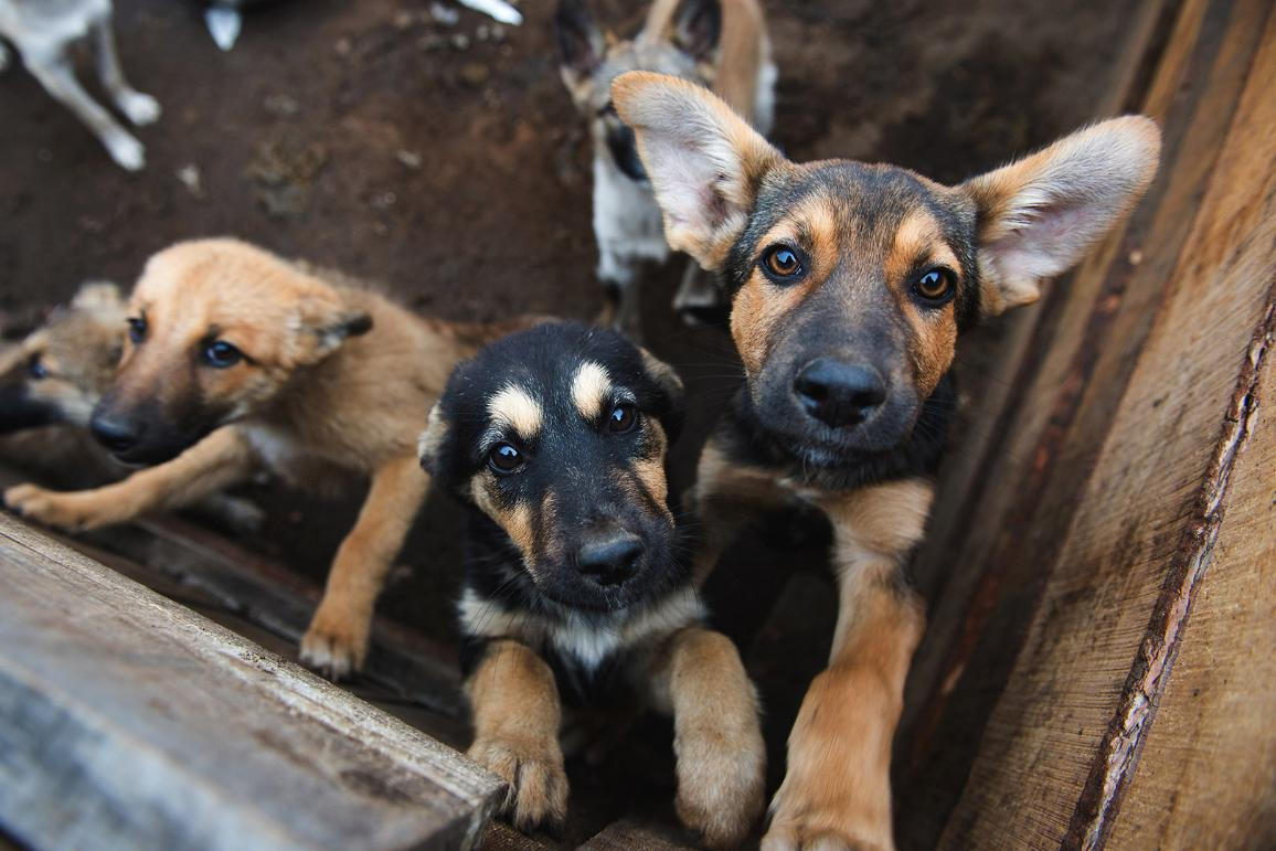 Puppies locked in the cage