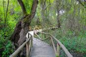 Wooden pathway in beautiful landscape in Donana Natural Park and nature reserve. Palace of Acebron in Huelva, Andalusia Spain